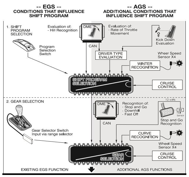 Caracteristiques-adaptatives-AGS.png